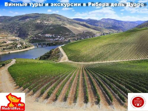 История виноделия в Испании. Современное виноделие.