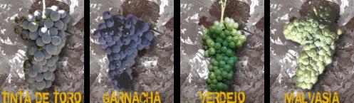 Дегустация вина в Испании, вино зоны Д.О. Торо D.O. Toro, Мадрид Испания.
