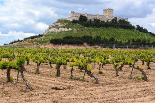 Дегустация вина в Испании, вина Д.О. Рибера дель Дуэро D.O. Ribera del Duero , Мадрид Испания.
